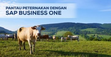 pantau peternakan dengan sap business one